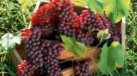Grapes Widescreen