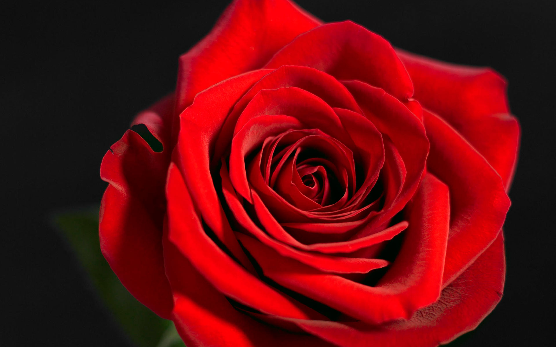 Simple Wallpaper High Resolution Red - 1133_red_rose  Collection_915740.jpg