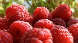 Raspberries Wallpapers
