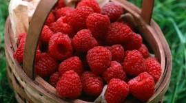 Raspberries High quality wallpapers