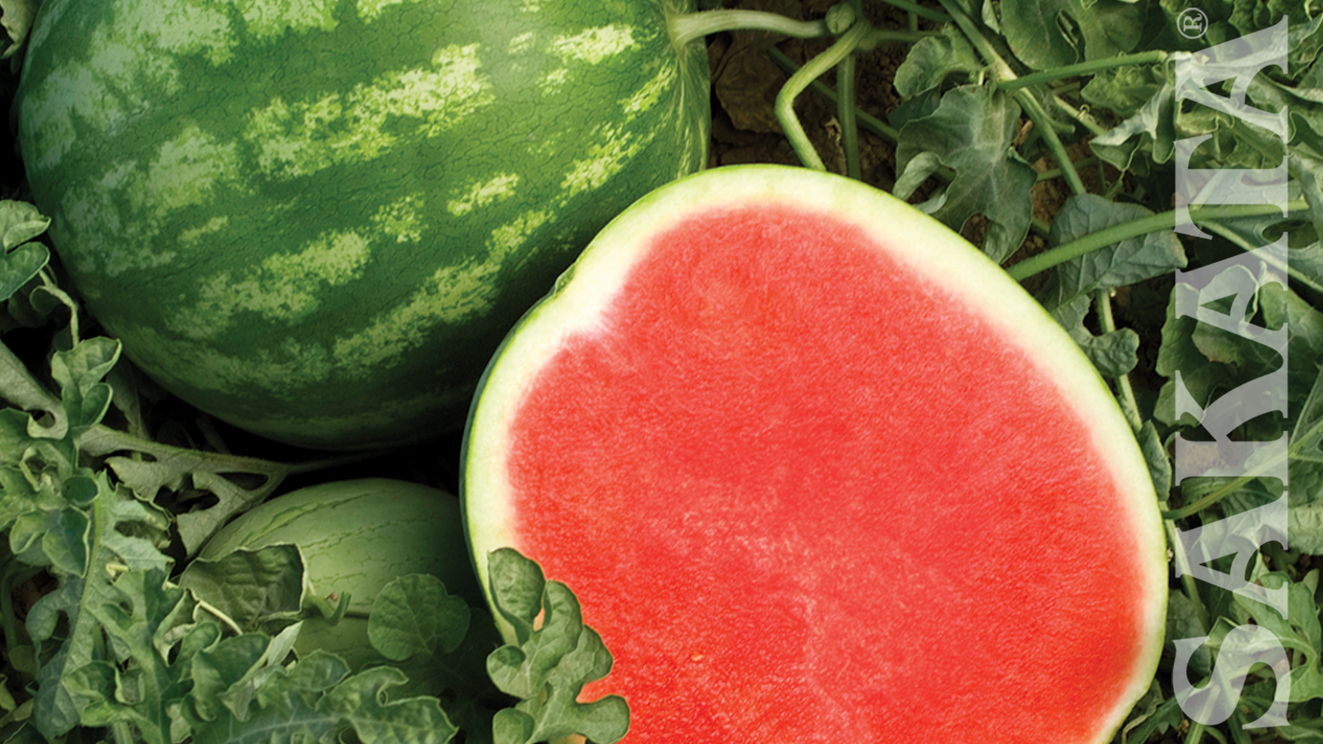 watermelon wallpapers high quality download free
