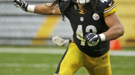 Troy Polamalu HD Wallpapers