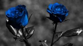 Black Rose 4K
