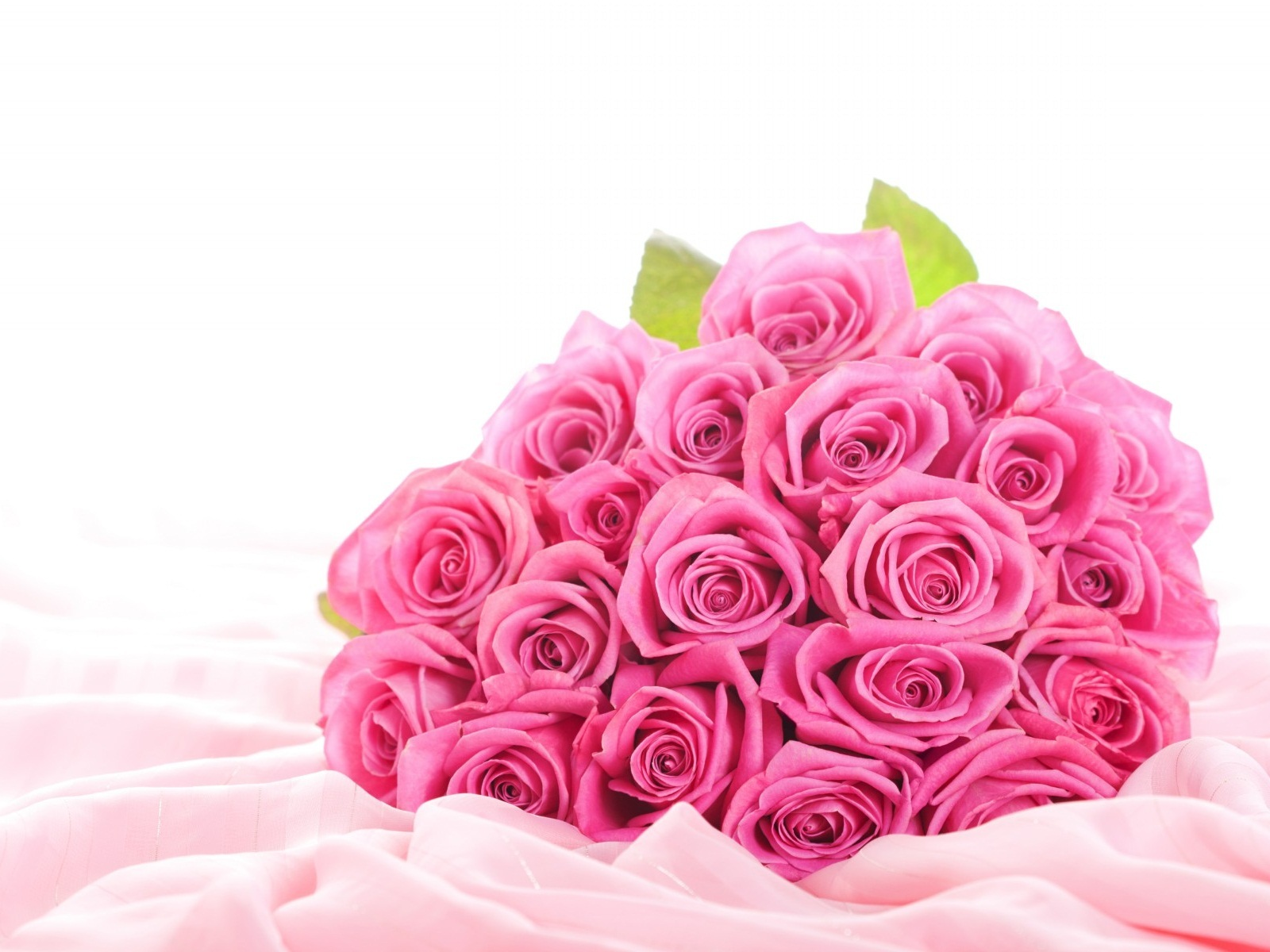 Pink Rose Wallpapers High Quality