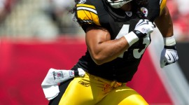 Troy Polamalu Wallpapers