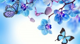 Blue Orchid High quality wallpapers