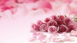 Pink Rose Images