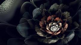Black Rose pic
