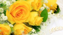 Yellow Rose High quality wallpapers