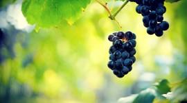 Grapes Photos