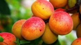 Peaches Widescreen