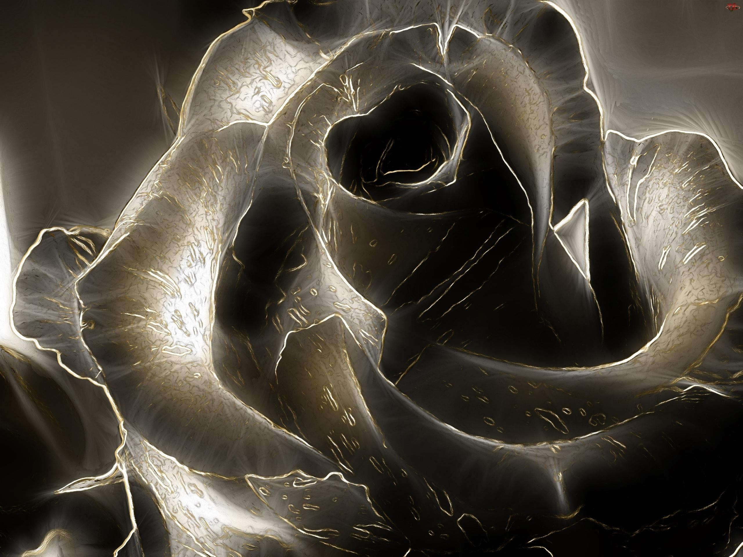 Black Rose Wallpapers High Quality