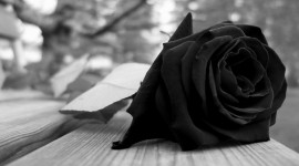 Black Rose HD