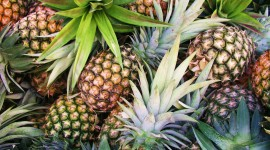 Pineapples Pictures