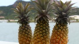 Pineapples 4K