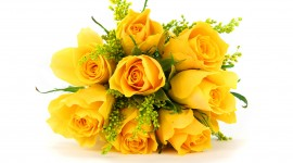 Yellow Rose Free download