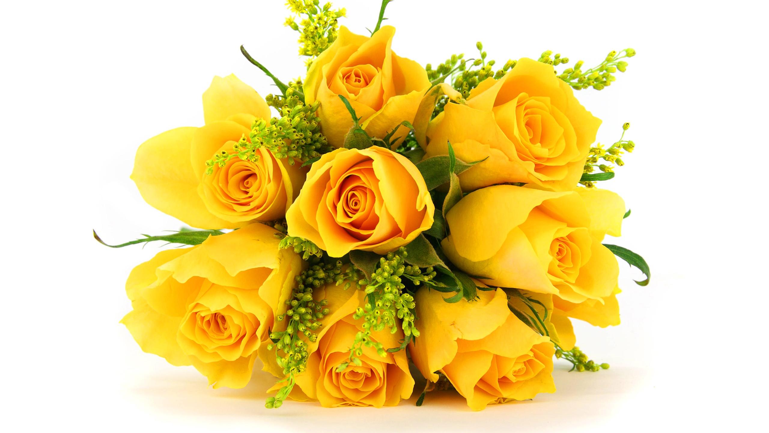 Hd wallpaper yellow rose - Hd Wallpaper Yellow Rose Hd Wallpaper Yellow Rose 6