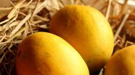 Mango Images