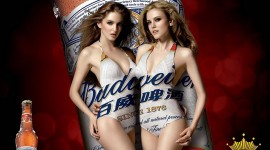 Budweiser HD Wallpaper