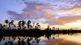 Everglades Download for desktop