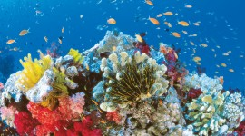 Florida Coral Reefs Free download