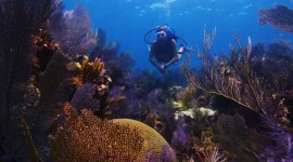 Florida Coral Reefs Pictures