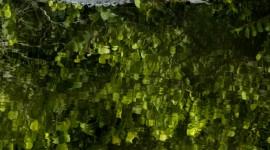 Everglades 4K