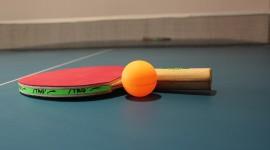 Ping Pong Free download