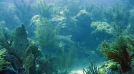 Florida Coral Reefs Pics