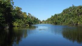 Everglades Pics
