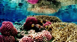 Florida Coral Reefs Wallpaper
