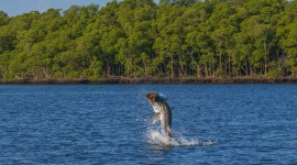 Everglades Images