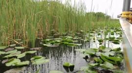 Everglades HD