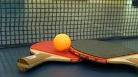 Ping Pong Download for desktop