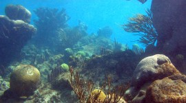 Florida Coral Reefs pic