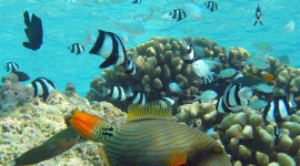Florida Coral Reefs Wallpapers HQ