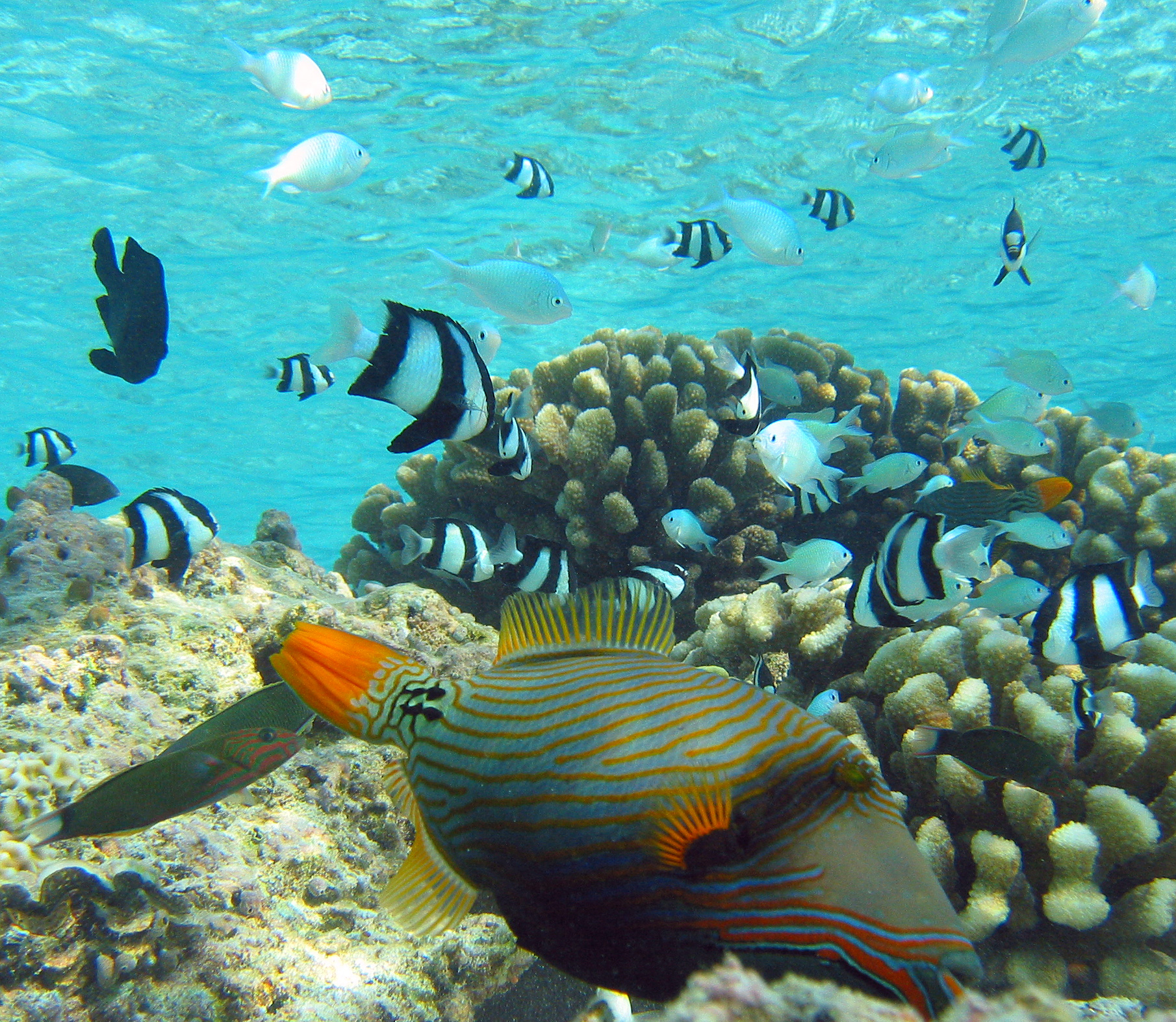 Florida Coral Reefs Wallpapers High Quality