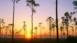 Everglades Free download