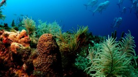 Florida Coral Reefs Full HD