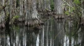 Everglades 1080p