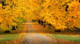 Autumn For desktop