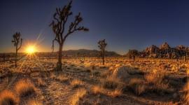 Desert Widescreen