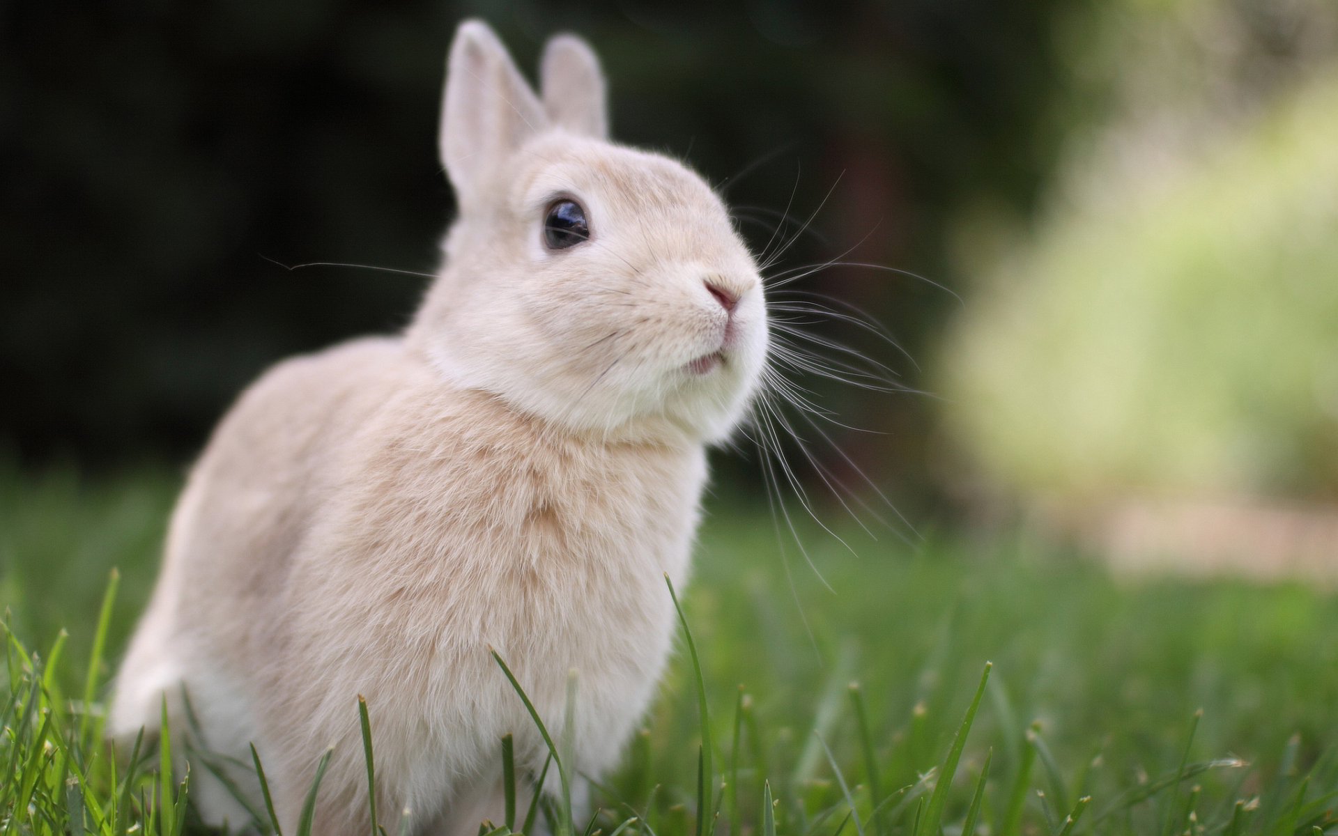Cute White Rabbit Wallpapers For Desktop: Bunny Wallpapers High Quality