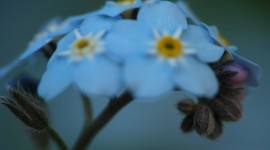 Blue Flowers Widescreen