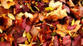 Autumn Leaves For desktop