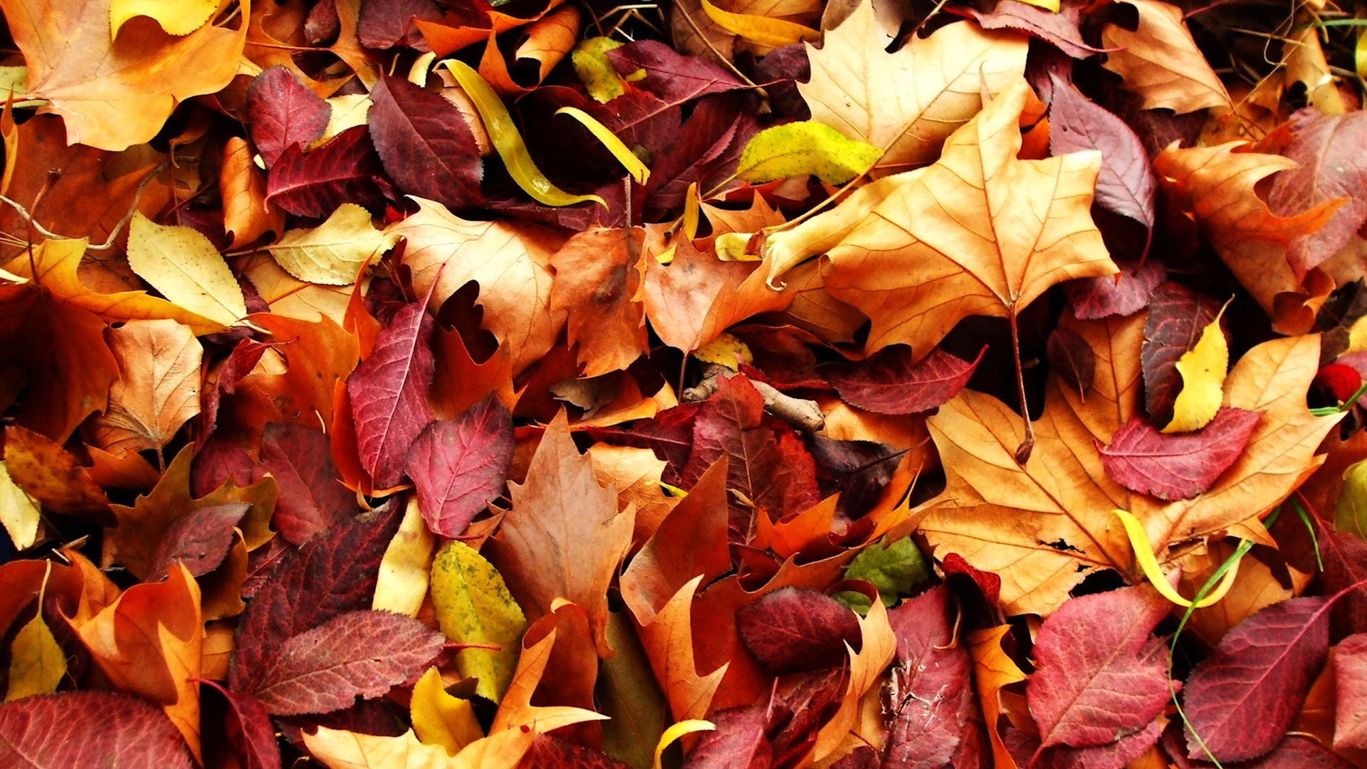 autumn leaves wallpapers high quality | download free
