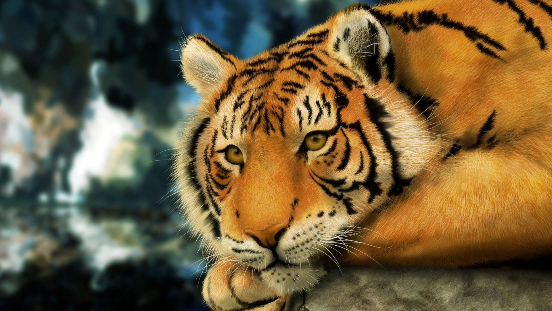tiger wallpapers high quality | download free