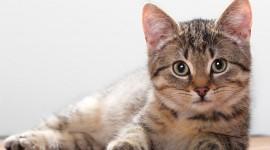 Cat For desktop