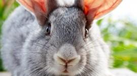 Bunny 1080p