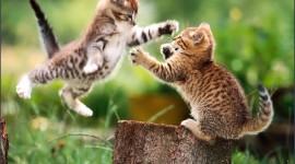 Cat Download for desktop